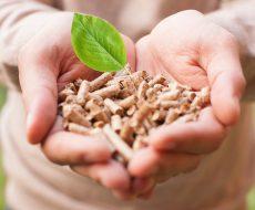1-biomassa
