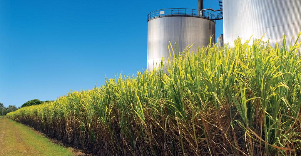 Biomassa-supera-usina-Itaipu-em-capacidade-instalada-de-energia